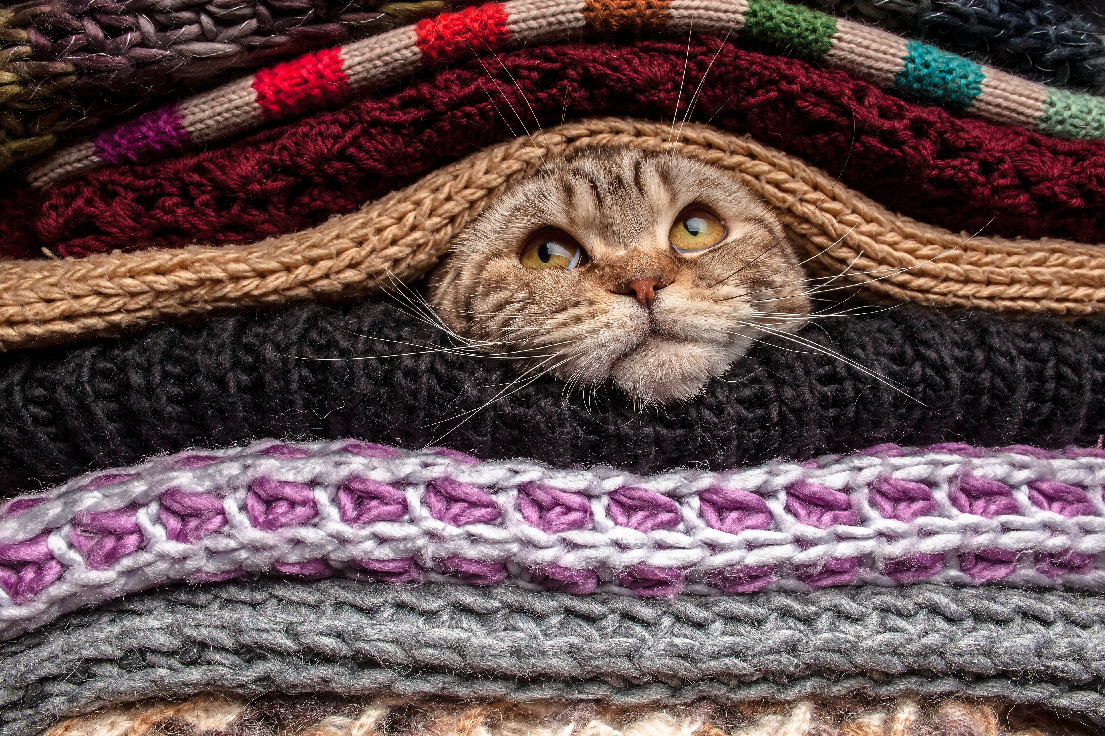 Photo of cat in blankets