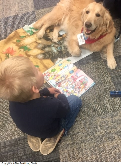 Little Bear, one of Rockrimmon's Paws to Read dogs, and a patron reading to him