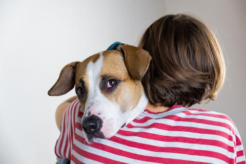 Person hugging brown and white dog
